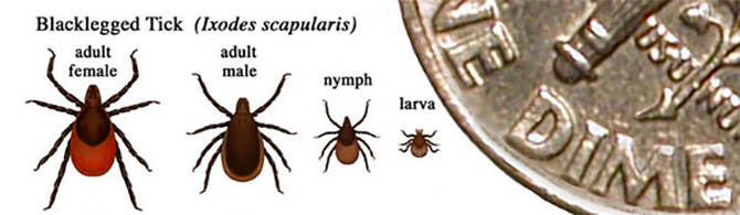 Did You Know Getting Bit By A Tick Could Paralyse Your Face?