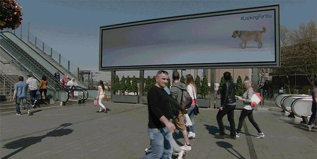 Dogs Follow People Across Billboards In This Clever Adoption Campaign