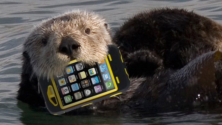 Zoo Incident Proves OtterBoxes Are No Match For Actual Otters