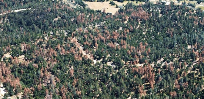 More Than 12 Million Trees Have Been Killed In California's Drought