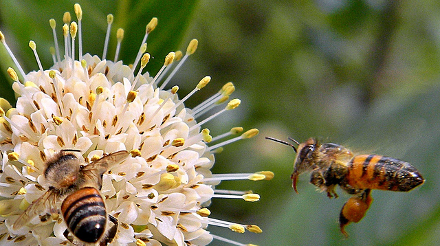 Buying Local Honey Won't Help Your Allergies; Here's Why