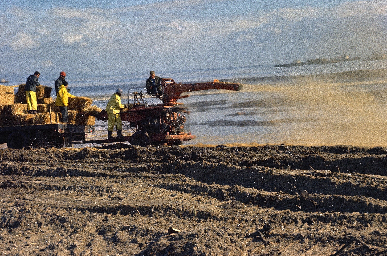 Not Again: How A 1969 Oil Spill Devastated The Santa Barbara Coast