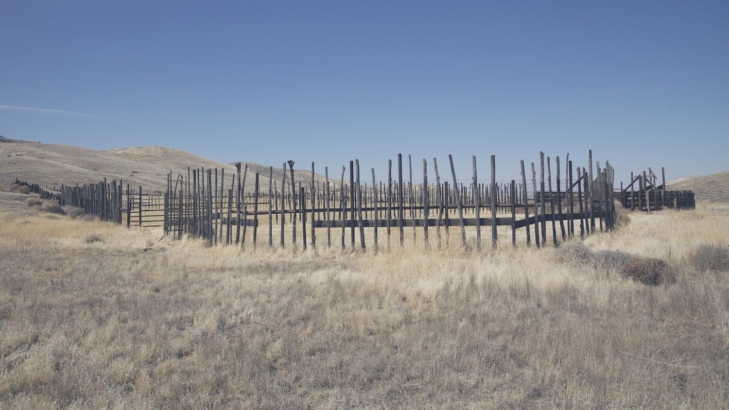 Inside California's Forgotten Grasslands