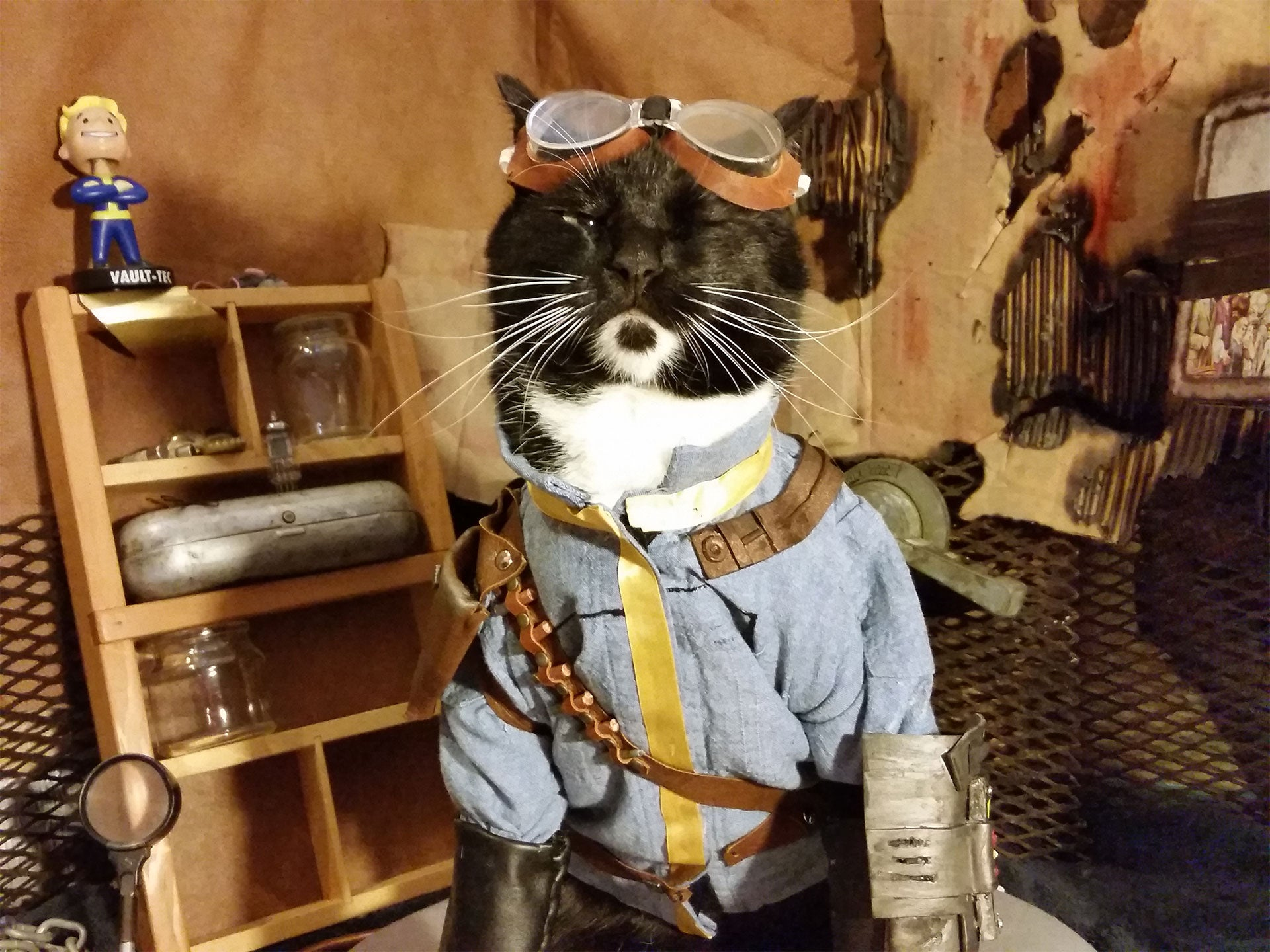 We've Had Enough Fallout Dogs. It's Vault Cat's Time.