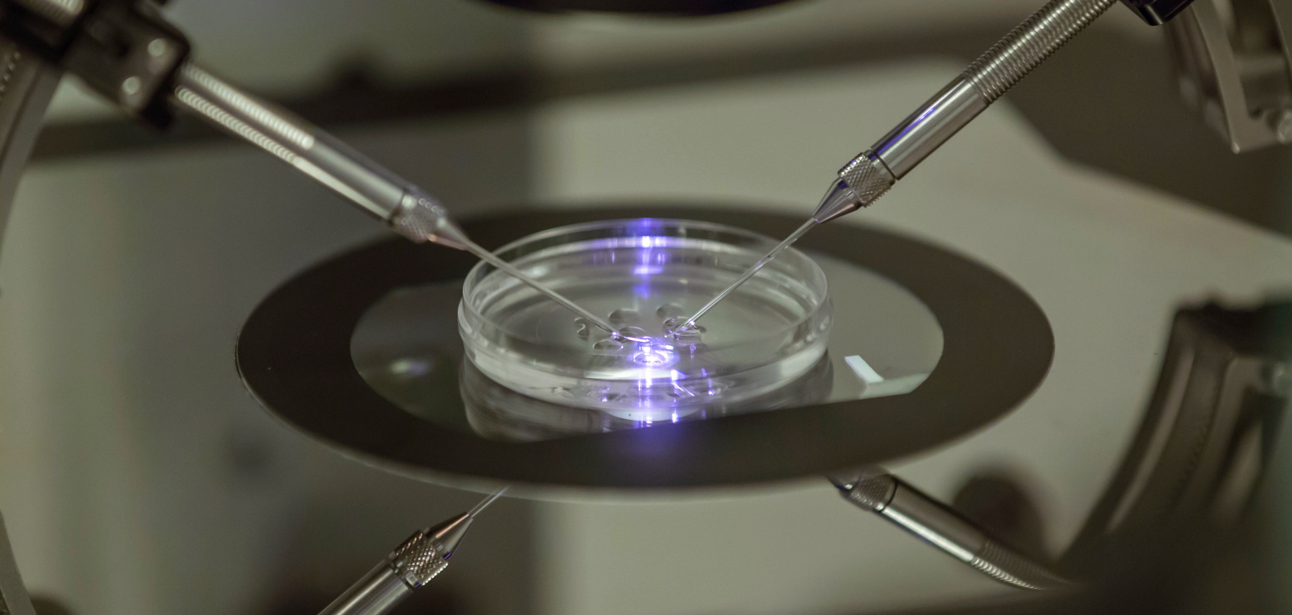 What Should Parents Do With Their Spare IVF Embryos?