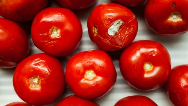Turn Overripe Tomatoes into Tomato Water Instead of Trashing Them