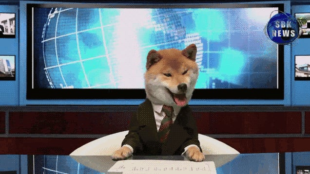Dog Newscasters Are the Best Newscasters