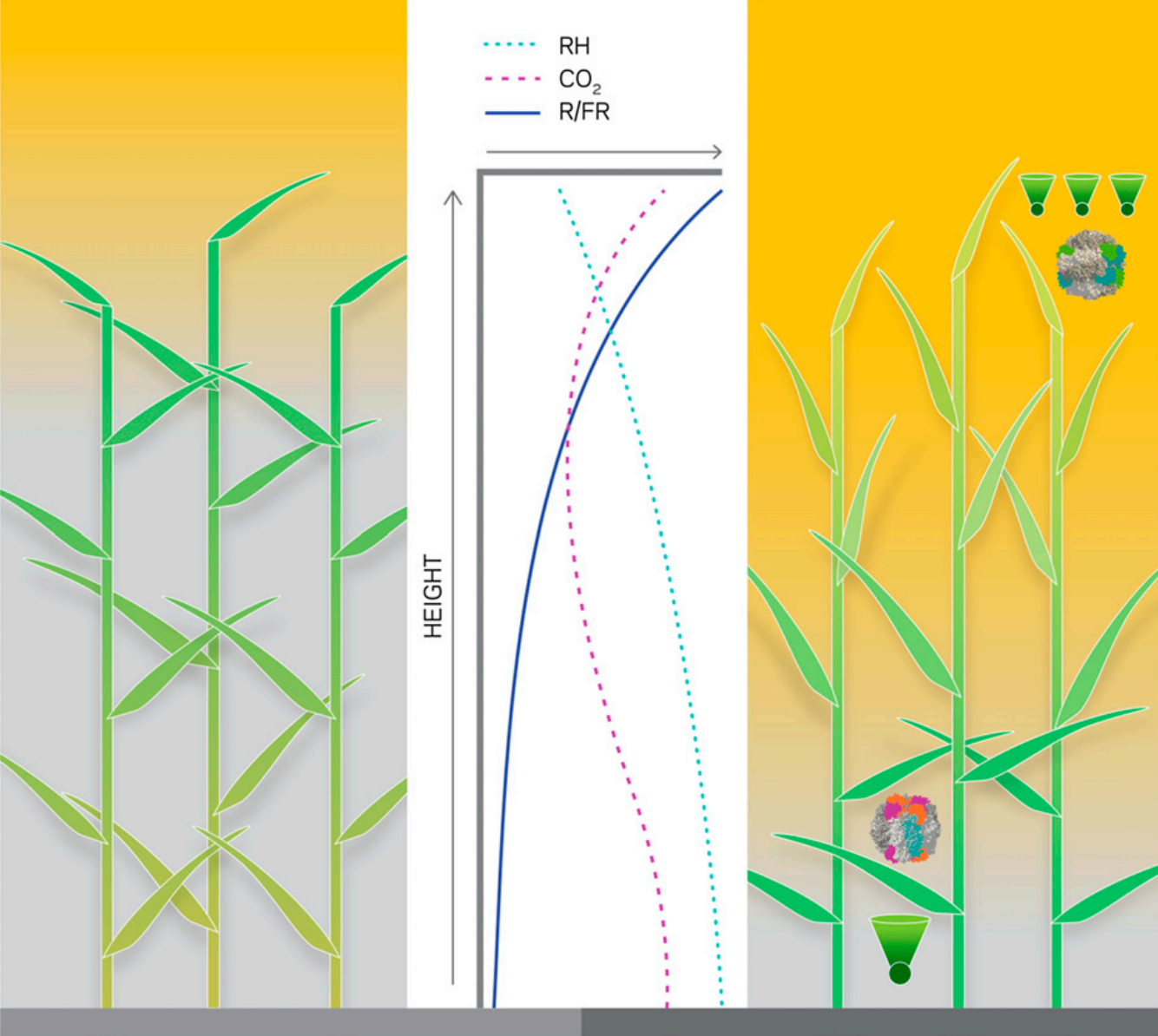 The Plan to Feed the World by Hacking Photosynthesis