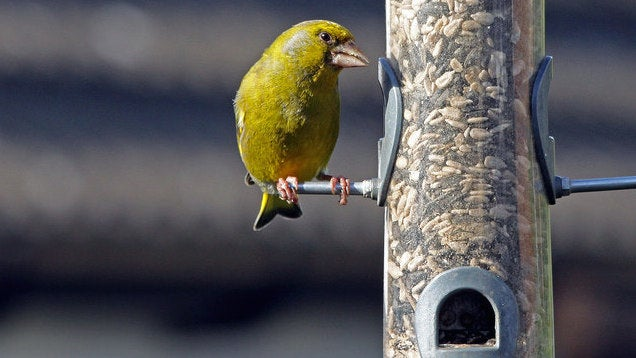 Clean Your Bird Feeder Or Bath Weekly To Avoid Pests And Disease