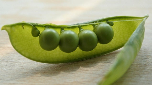 Stop Yourself From Sleeping on Your Stomach with an Uncooked Pea
