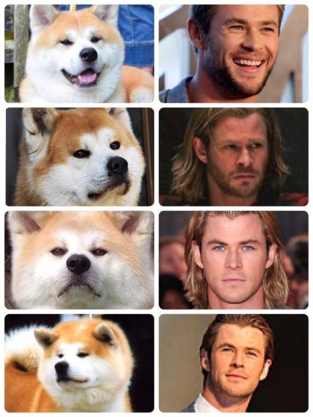 Chris Hemsworth Really Looks Like a Dog