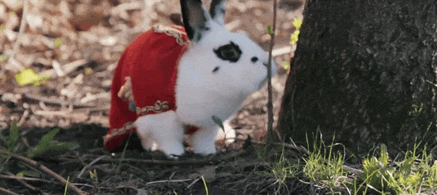 From Assassin's Creed Kittens To Brave Bunny Wizards
