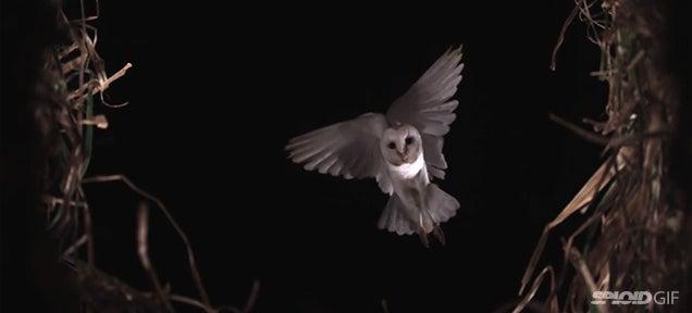 Beautiful video of beautiful birds flying in slow motion