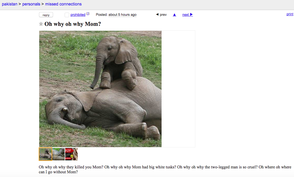 Why Is Craigslist Censoring Anti-Ivory Ads But Not Real Ivory Sales?