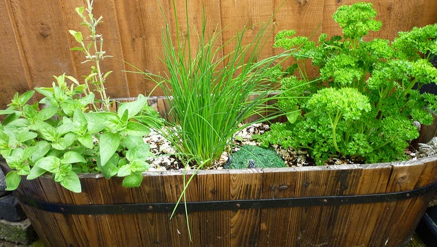 What Are the Best Multi-Purpose Plants for Your Garden?