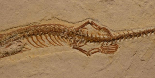 Brazil Would Like Its Four Legged Snake Fossil Back