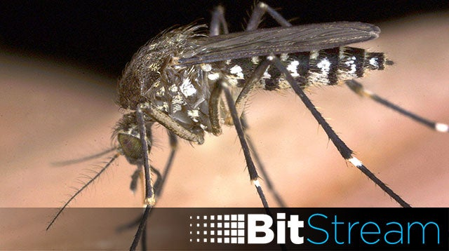 Alphabet Wants To Start Breeding Experimental GMO Mosquitoes