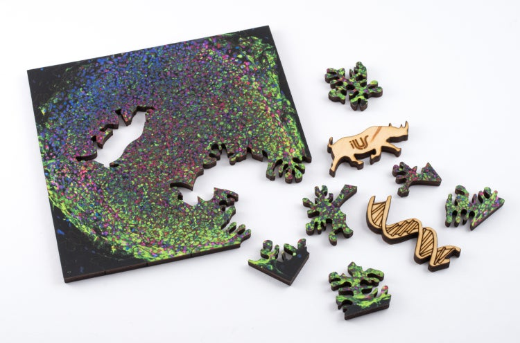 Explore the Microscopic World With These Gorgeous Scientific Puzzles