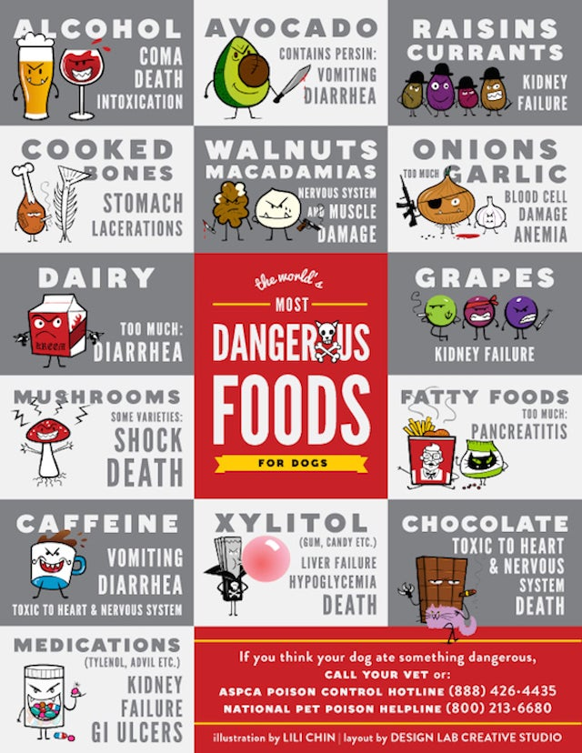 Common Foods That are Toxic to Dogs