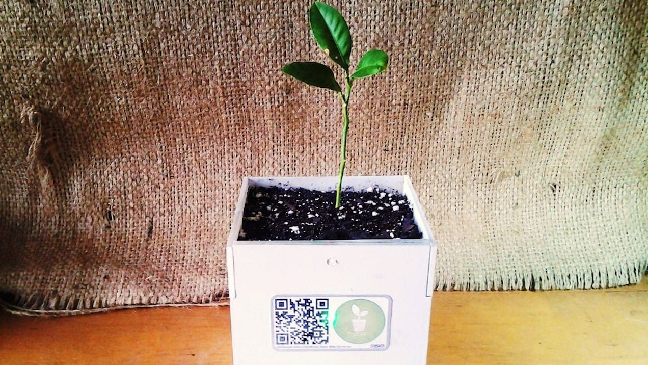 Build a Smart Plant Pot that Alerts You When It Needs Help