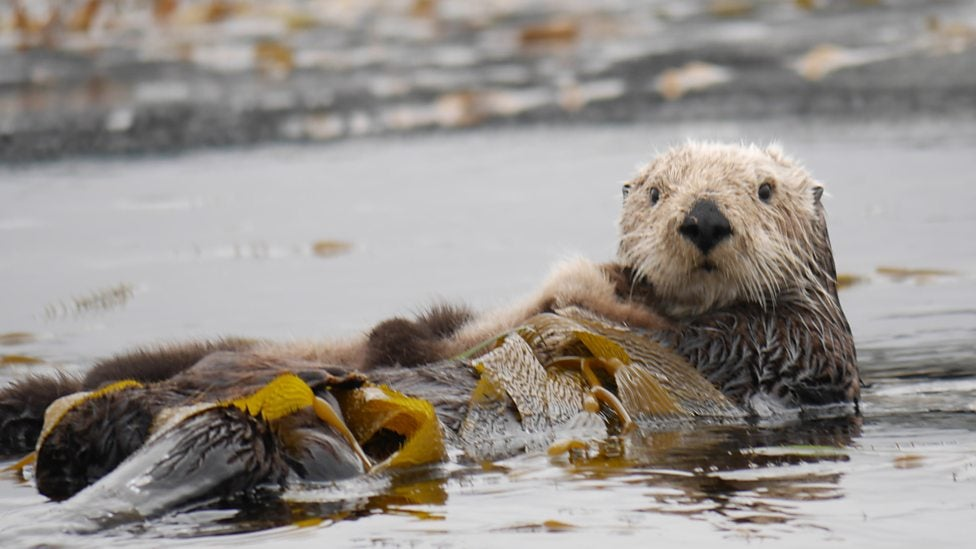 A Reality TV Show Starring Sea Otters Is Taking the Internet by Storm