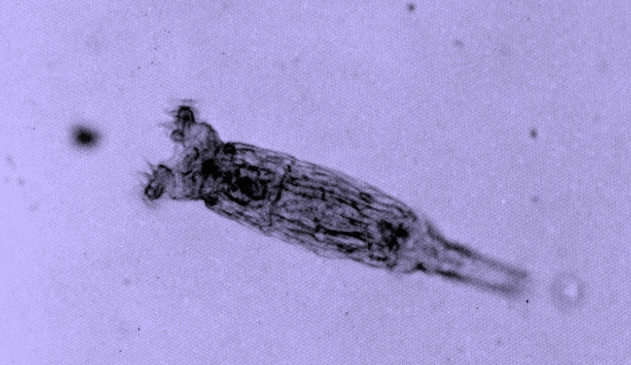 We Thought These Microscopic Invertebrates Never Had Sex. Maybe We Were Wrong.