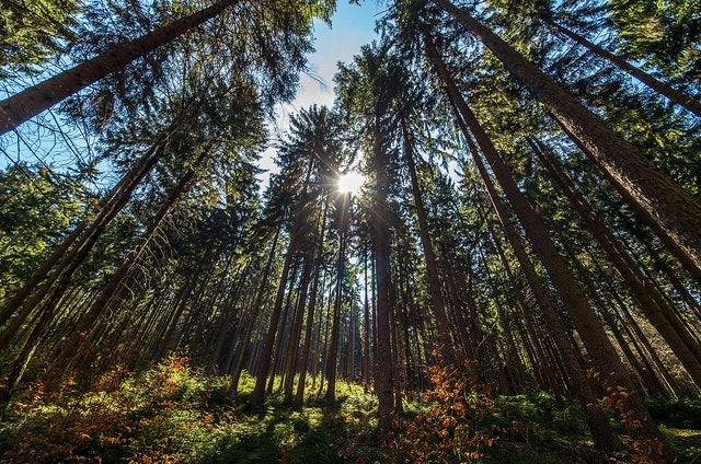 Humans Have Eliminated Half the World's Trees