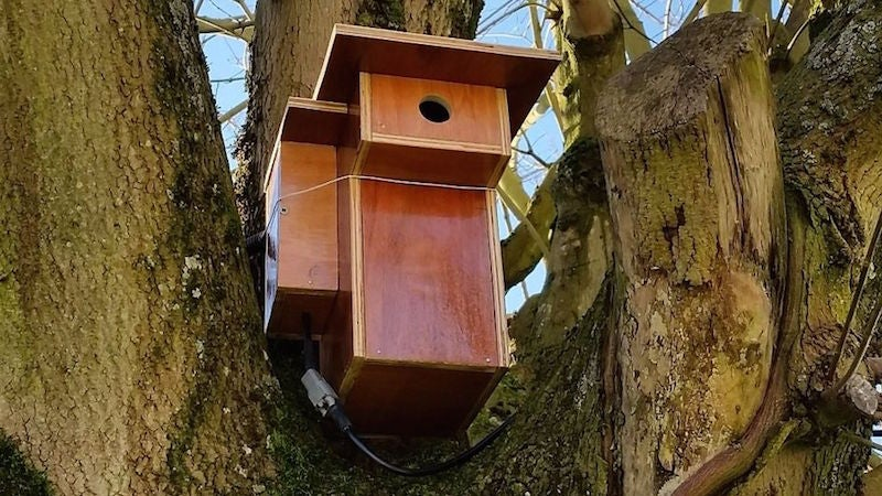Build an Automated Birdwatching Camera with a Raspberry Pi