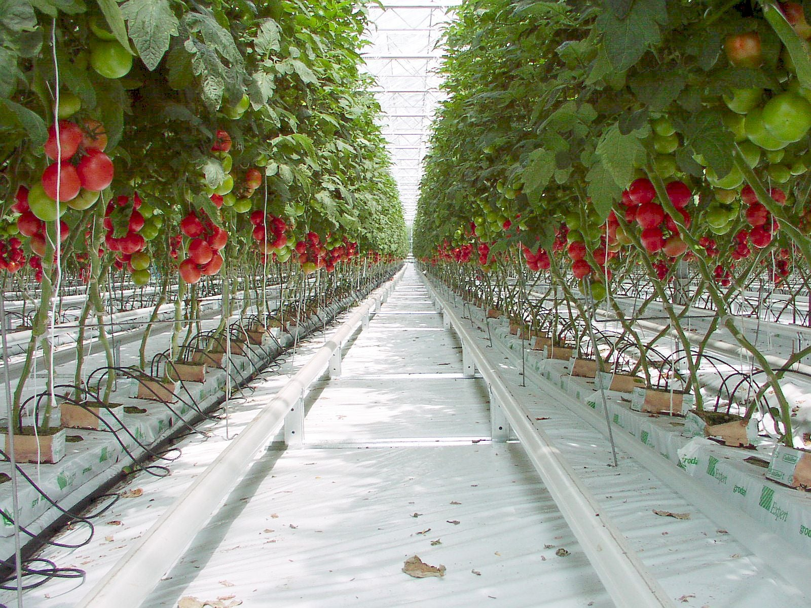 How Vertical Farming is Revolutionising the Way We Grow Food