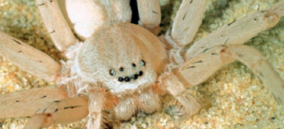 These 4 New Spider Species Just Want to Be Your Friends