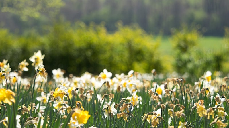 Plant Bulbs Now For Beautiful, Effortless Flowers In Spring