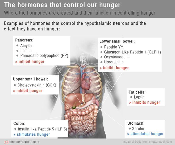 How Hormones Make You Feel Hungry and Full