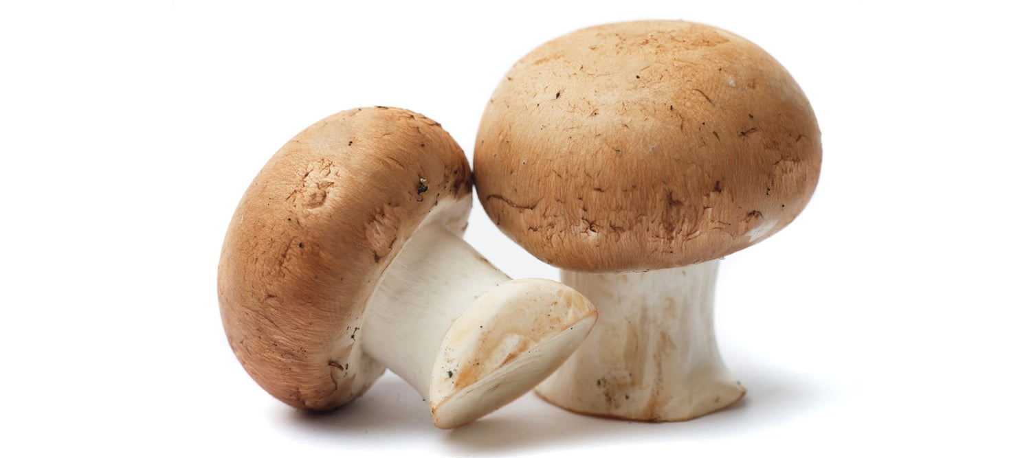 The Future Will Be Full of Mushroom Batteries