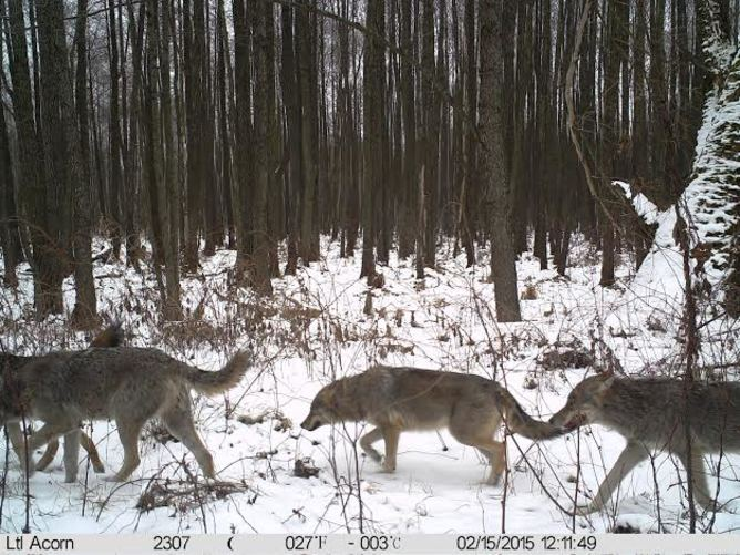 Wildlife Is Making a Comeback at Chernobyl — Now That People Have Left