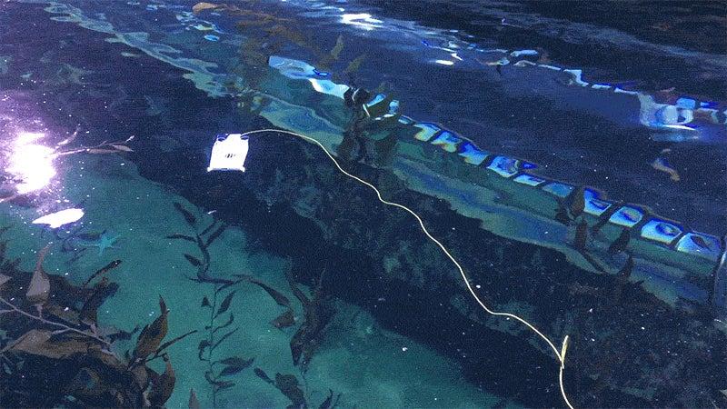 New, Ultrafast Swimming Drones Are Tiny Ocean Explorers