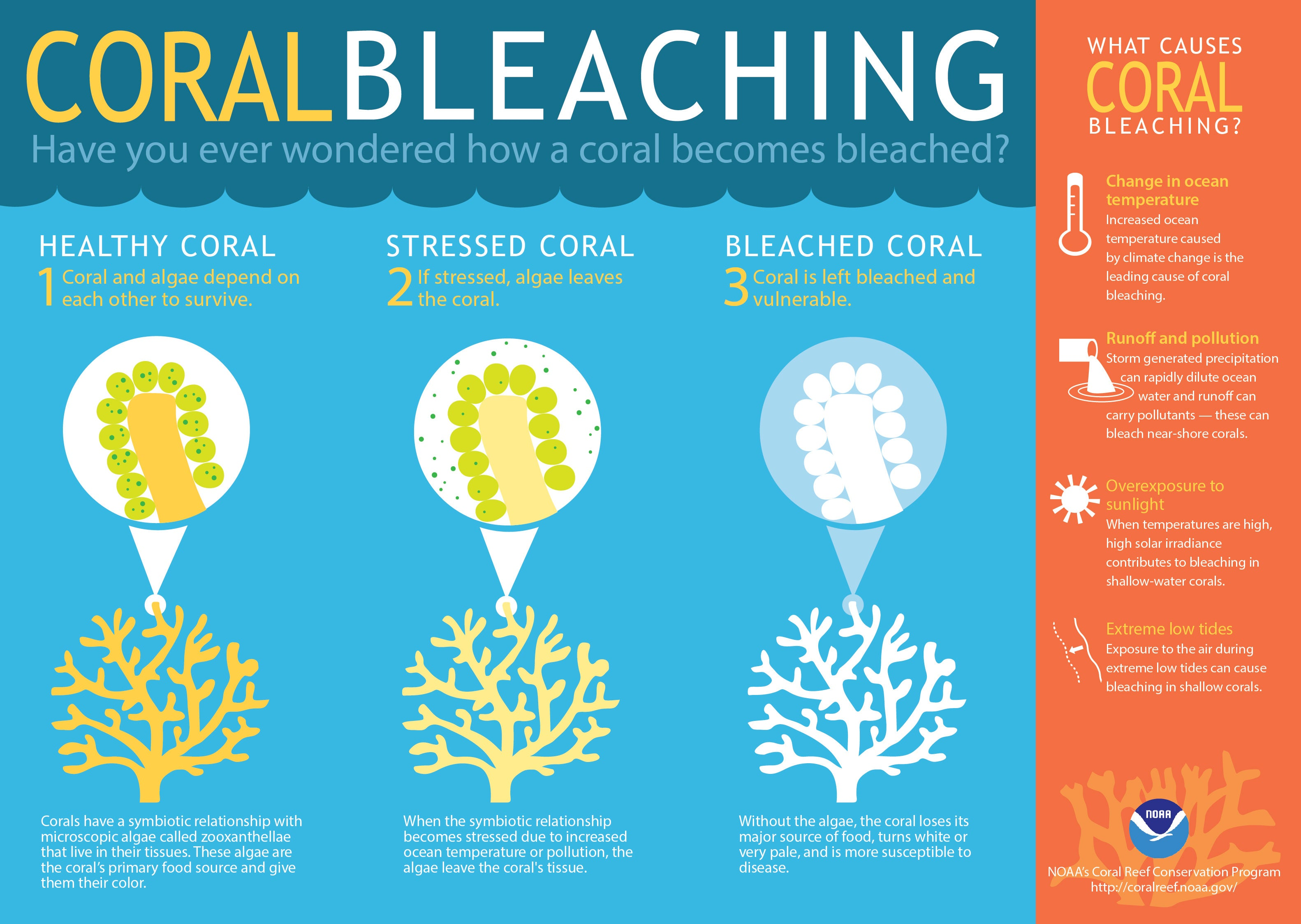 A Massive Bleaching Event is Threatening the World's Coral Reefs
