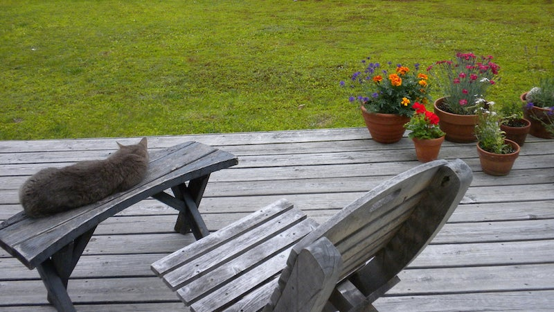 Prevent Water Damage to Your Deck by Putting Pot Risers Under Plants