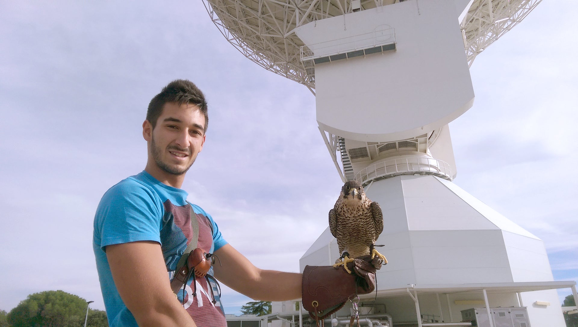 Why Does A Falcon Live At This Space Antenna?