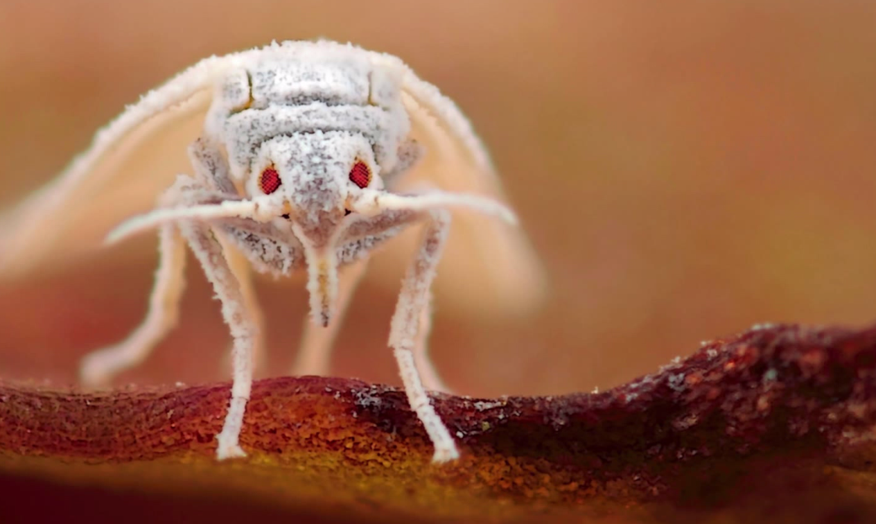 How a Supercomputer Helps Fight Flies That Ravage Crops for 700 Million People