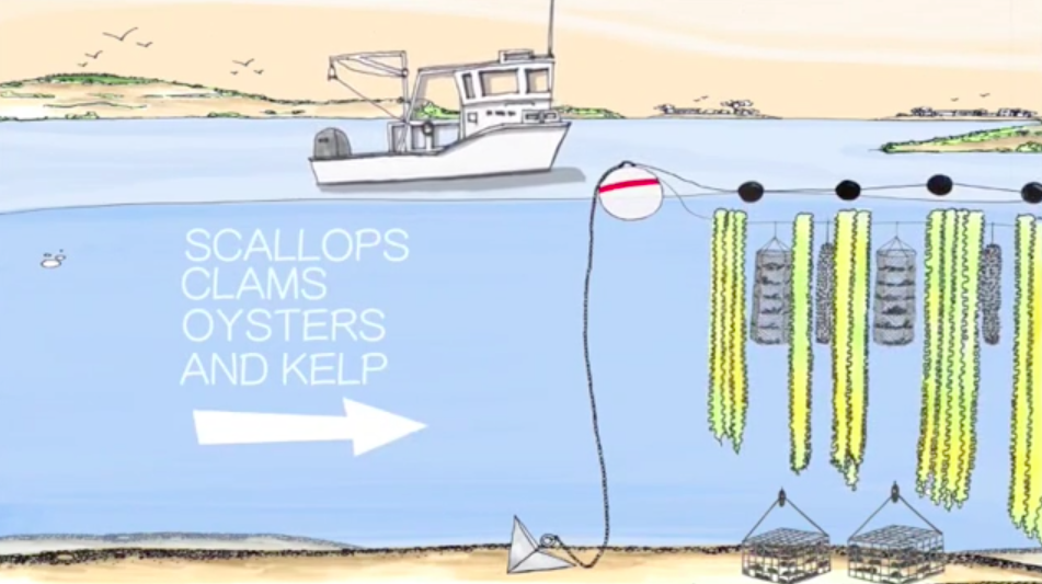The Underwater Farms That Could Help Stop the Death of Our Oceans