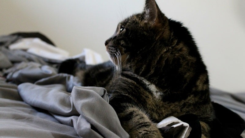 Avoid Laundry Overload By Matching Your Linens To Your Pets