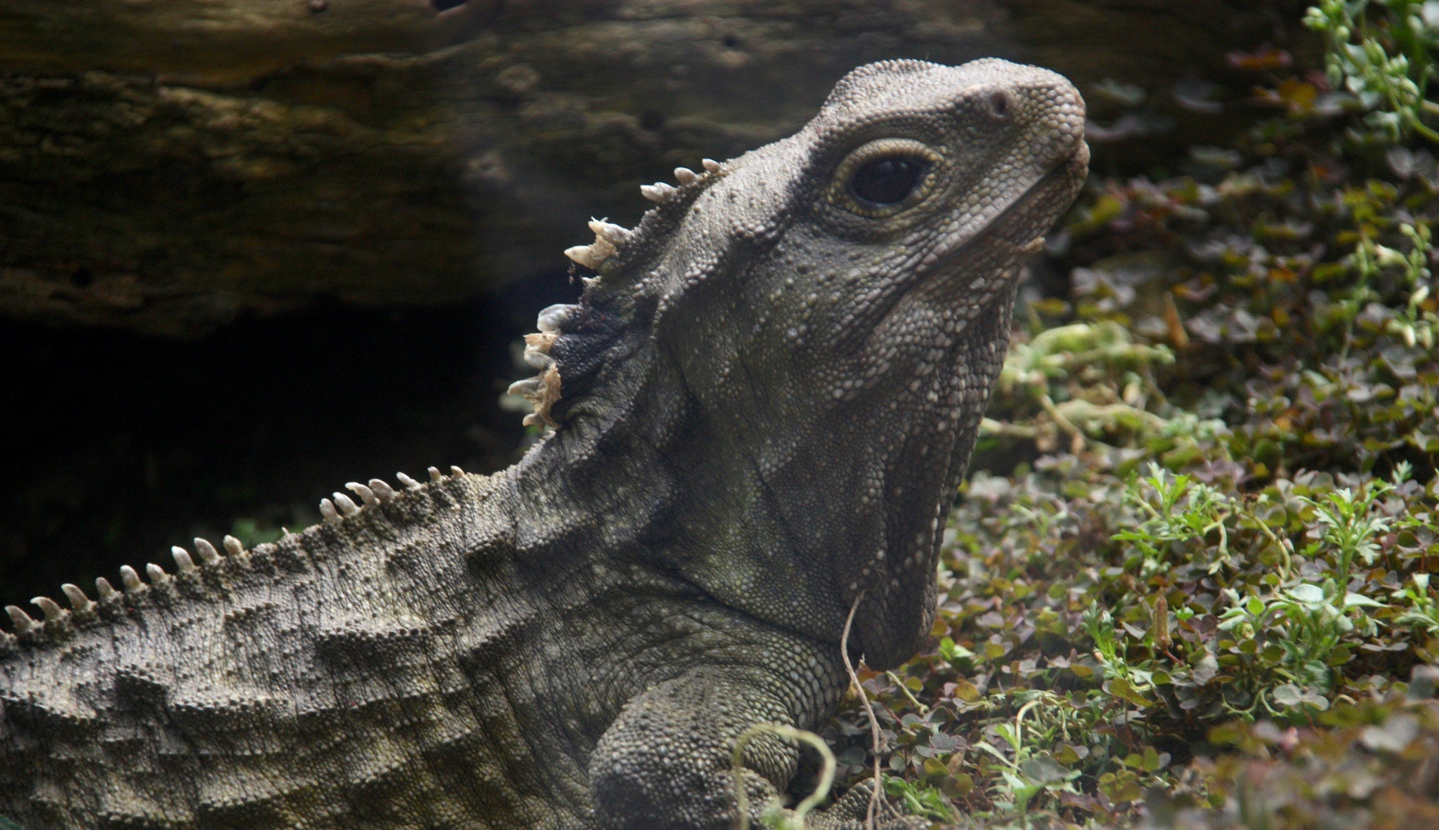A Reptile With No Penis Just Solved a Baffling Scientific Mystery