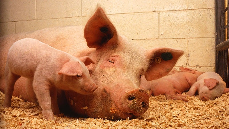 DIE, PIGs, DIE: Bad Initials Can't Kill You After All