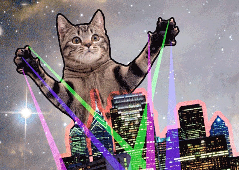 Is It a Coincidence That the Internet's Birthday and National Cat Day Are the Same Day?