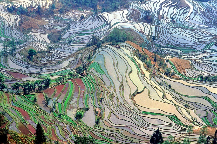 How Rice Built The World As We Know It