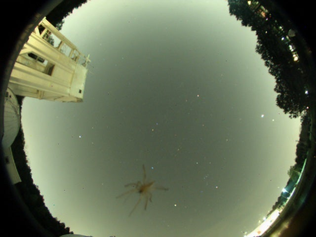 Who Needs Stars When You Can Gaze at Spiders Through Your Telescope?