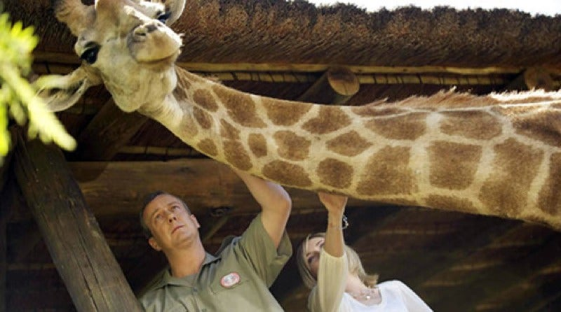 Don't Giggle At Some Of The Unusual Ways Giraffes Can Die