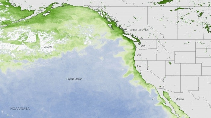 El Niño's Algae Blob From Hell Is Poisoning Seafood
