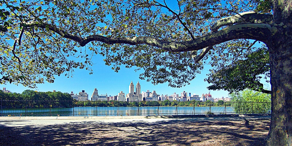 A Politician Would Like New York Trees to Have Their Own Email Addresses