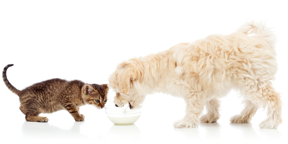 Why Dogs Will Eat Anything But Cats Are Fussy as Hell